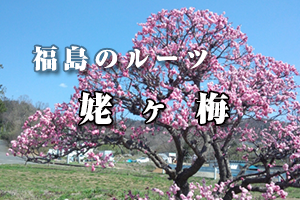 福島のルーツ - 姥ヶ梅